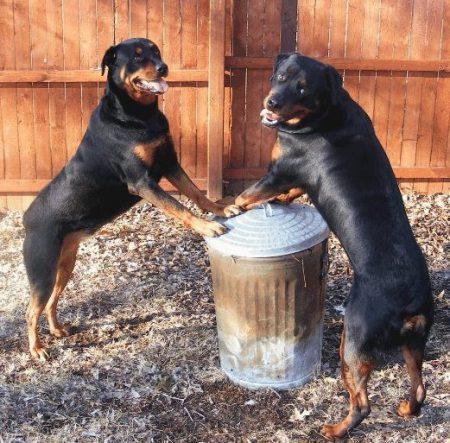 adrienne's dogs