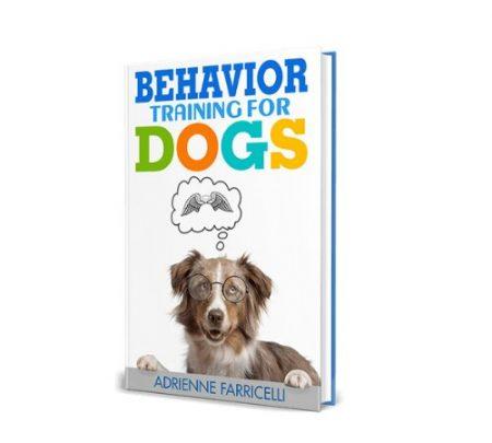 behavior training for dogs